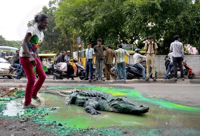 crocodile pothole bengaluru bangalore