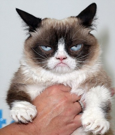 Grumpy Cat unveils DC waxwork and makes Broadway debut