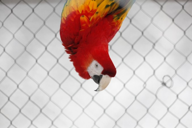 A family parrot exposes husband's affair with housemaid in Kuwait