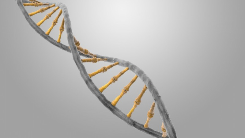 DNA, RNA, Genetic code, Base pairs, genome, cells