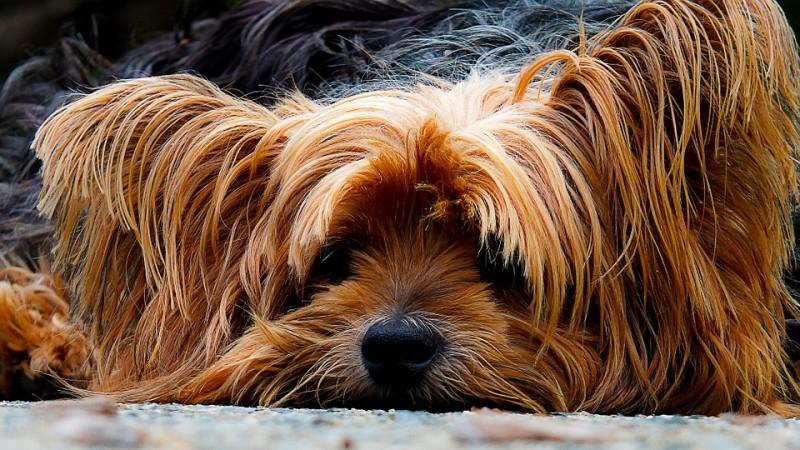 dog,reggae music,