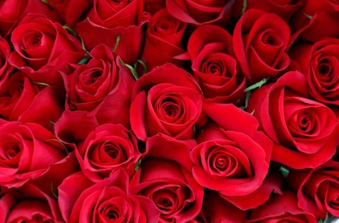 情人节,情人节,情人节,情人节,情人节,巧克力,玫瑰,生日,糖果,南瓜,更多,糖果,零售商。