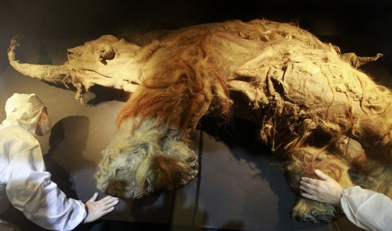 woolly mammoth,extinct species, resurrect, genetics,