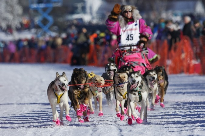Iditarod Dog Sled Race: 5 interesting facts that make this ...