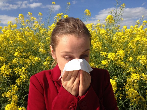 pollen allergy, sinus, asthma, nasal allergies, allergy, health,