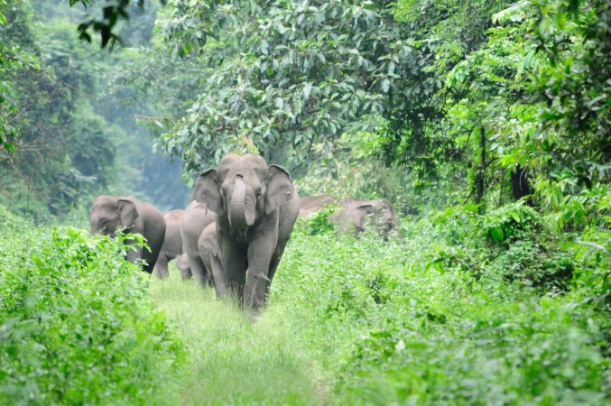 Elephant attack in Kovai