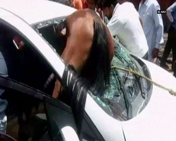 Horse stuck in car windshield