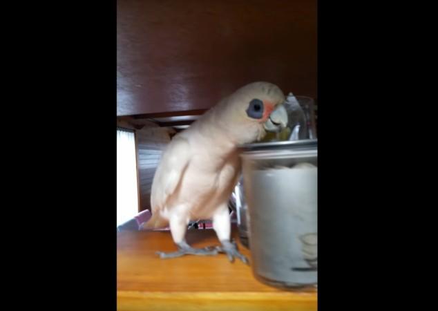 Eric the bird, Eric the legend, viral video, funny, weird,