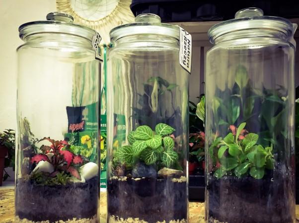 Spy plants