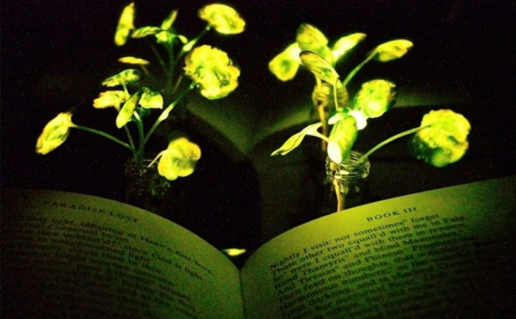 Illumination of a book with the nanobionic light-emitting plants
