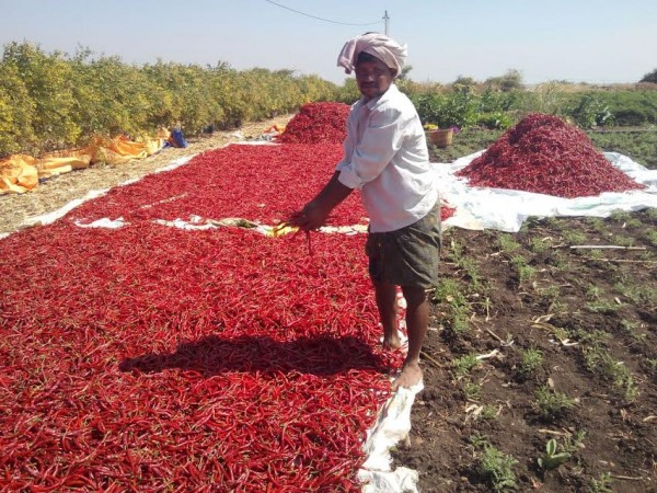 Farmer in Kurnool