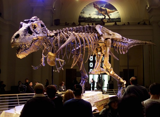 Researchers investigate 'baby' tyrannosaur fossil found in Hell Creek