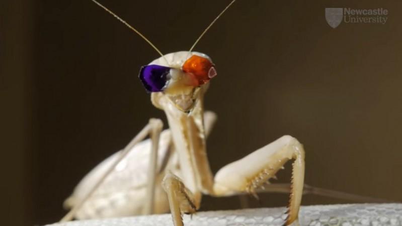 3D vision praying mantises