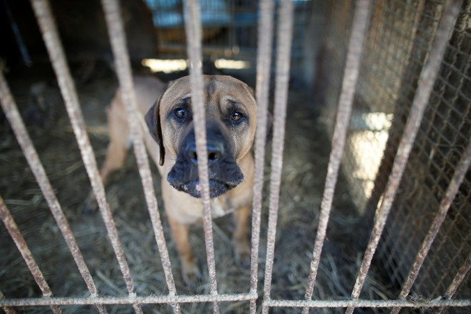 Animal aid organizations in South Korea on overdrive to