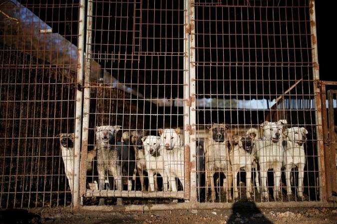 Dog farm in South Korea