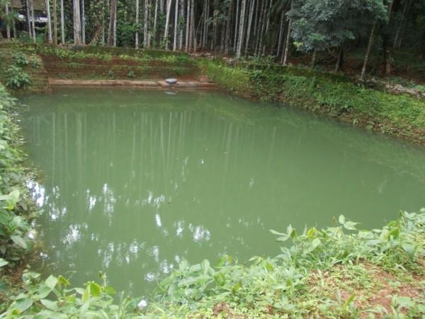 Kerala pond