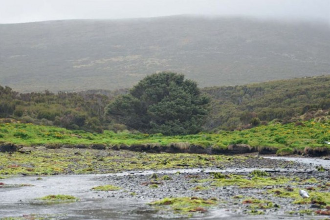 The loneliest tree in the world bears sign of new geological age
