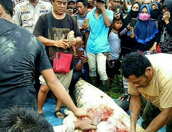 Man mauled to death by crocodile in Indonesia