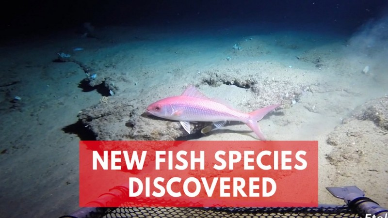Scientists discover a hidden ocean Twilight Zone filled with unknown fish