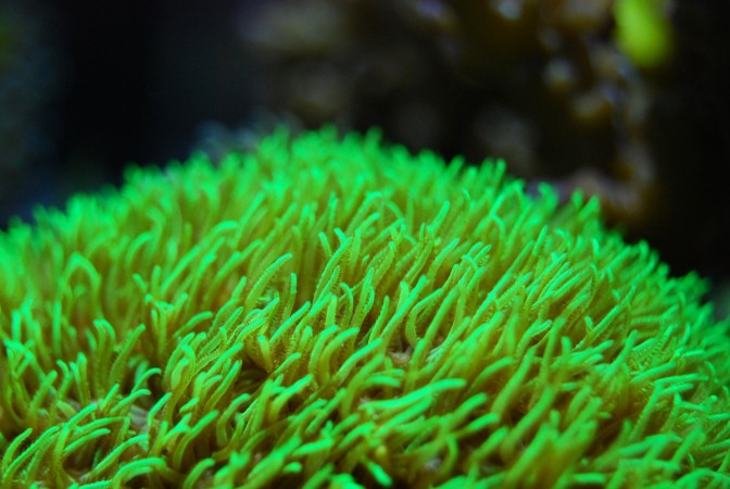 Scientists discover 'secret' coral garden 7500 feet under the Gulf of Mexico