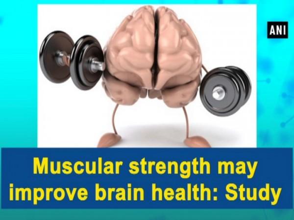 Muscular strength may enhance brain health: Study