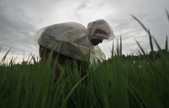 A farmer covered with a plastic sheet