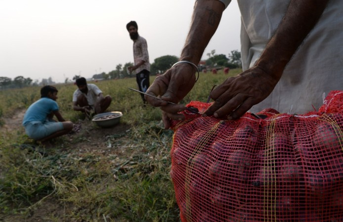 An Indian farmer packs onions for sale in market in a field