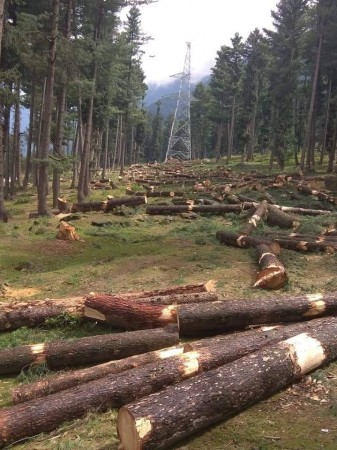Felling of trees in Kagan area in Kashmir
