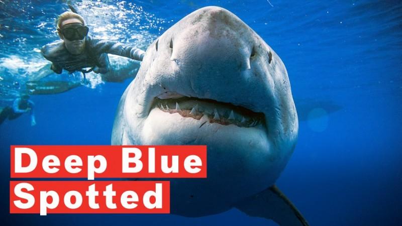 蓝鲨在蓝海海岸的黑海里有一片黑色的海地人