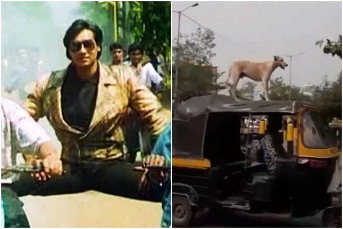 Like Ajay Devgn's stunt, dog balances itself on moving auto