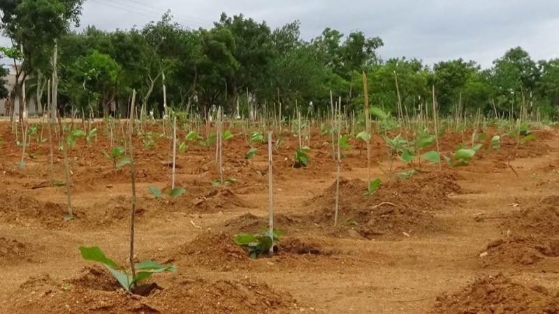Karnataka tree plantation