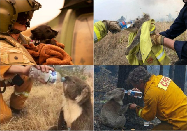 Victims of Australia wildfires