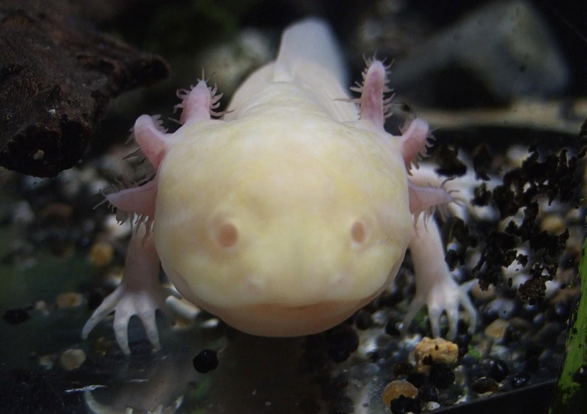 Weird animals on the verge of extinction