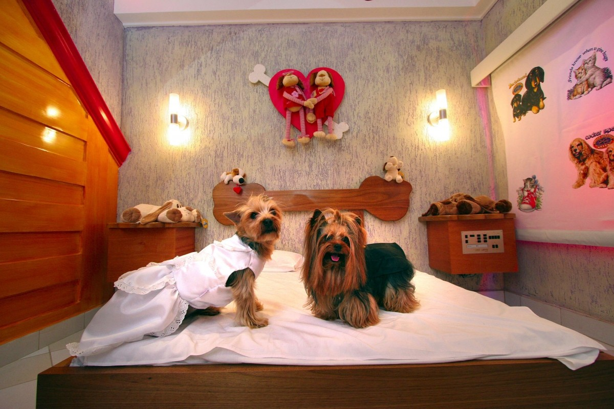 World's Top 10 Luxurious Hotels and Restaurants for Dogs