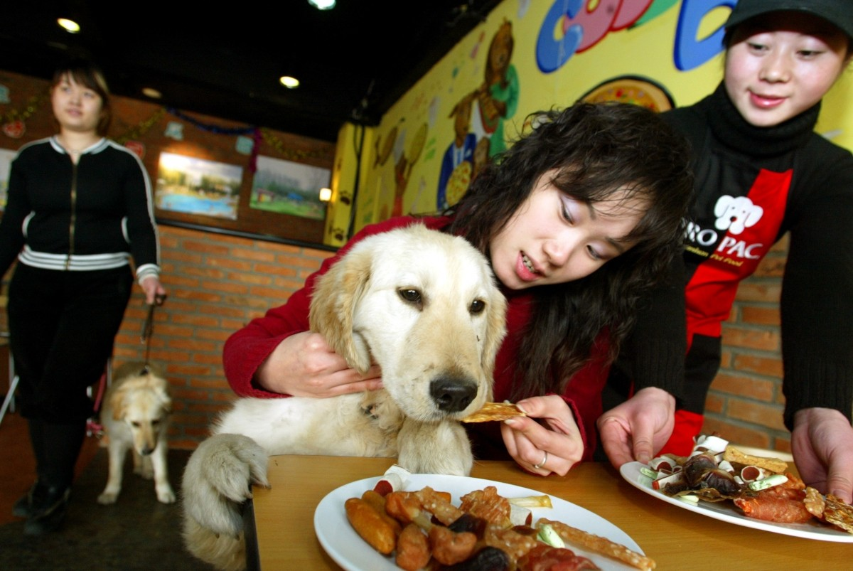 Worlds Top 10 Luxurious Hotels And Restaurants For Dogs -3267