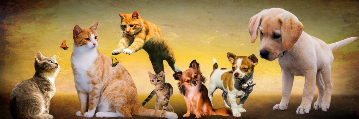 cats or dogs 3