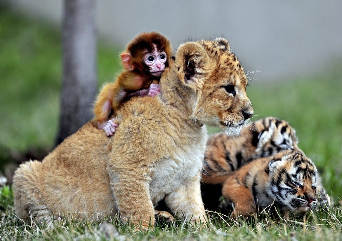 friendship day unusual bond between animals photos
