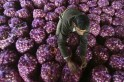 As prices skyrocket, 11,000 tonnes of onions to reach India from Turkey