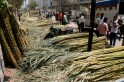 Centre sour as sugar exporters miss target by wide margin