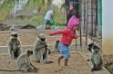 Uttar Pradesh: 12-day-old baby snatched, killed by monkey in Agra