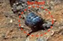 Aliens lived on Mars? UFO researcher spots fossil-like structure on NASA image