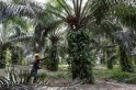 India resumes buying Malaysian palm oil as Kuala Lumpur offers discount