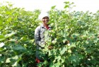 Happy Farmer in Kurnool.