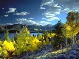 25. Aspen (North America)