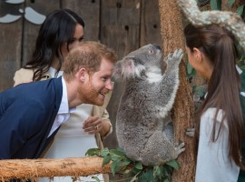 Prince Harry at Taronga Zoo
