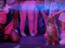 Ariana's dog was not scripted