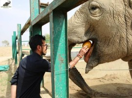Yuzvendra learnt about the past story of Maya, Phoolkali and Laxmi among the 20 elephants under rehabilitation at the Wildlife SOS Elephant Conservation and Care Centre and interacted with elephant keepers and veterinarians.