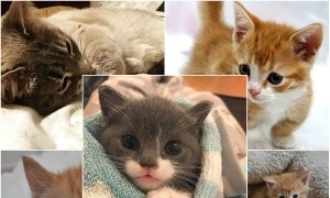 Cats are super lovable pets. Everything related o them stimulates us always. Have a close look at these 15 cute cats on Instagram.