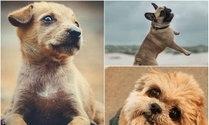 We constantly tap Instagram for feeds on brunches, toes at the beaches, sunsets and lot more. But there's nothing better than finding some adorable dogs on this visual sharing platform. Look at these 15 cutest shots of fur babies.