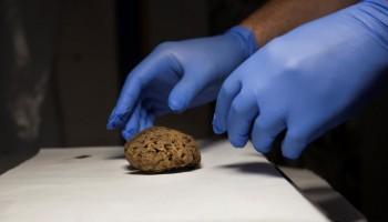 Preserved brains,Spanish grave,Spanish Civil War